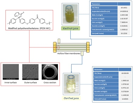 Quality of Kiwifruit Juice Clarifed by Modifed Poly(Ether Ether Ketone) Hollow Fiber Membranes