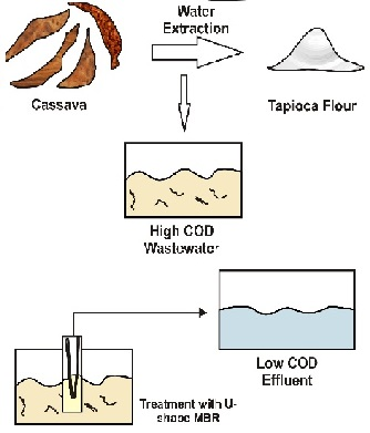 Hollow Fiber Membrane Bioreactor for COD Biodegradation of Tapioca Wastewater
