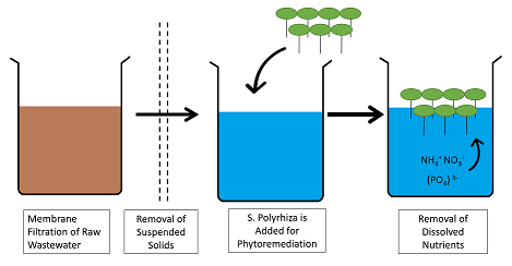 Membrane Filtration Pretreatment and Phytoremediation of Fish Farm Wastewater