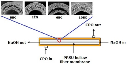Effect of Ethylene Glycol as Pore Former on Polyphenylsulfone Hollow Fiber Membrane for Crude Palm Oil Deacidification through Membrane Contactor